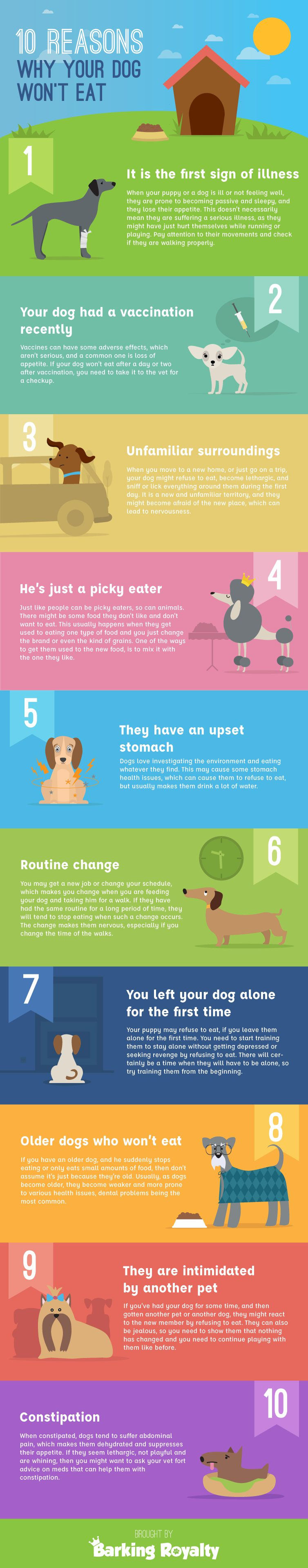 Infographic of 10 reasons dog wont eat