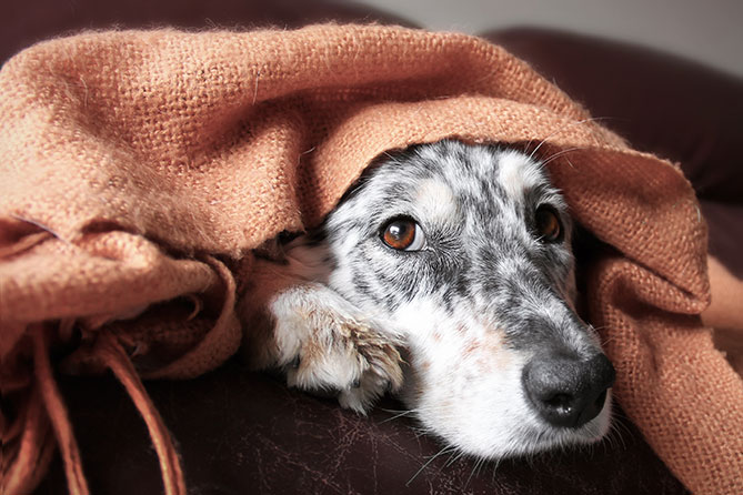 How do you Transition a Traumatised Dog into your Home?