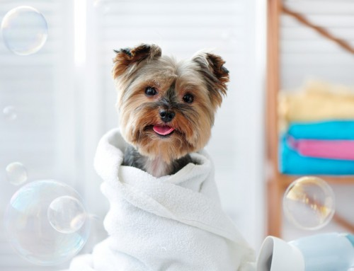 The Benefits and Importance of Regular Pet Grooming