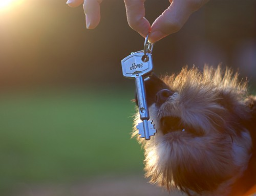 How to find a rental for you and your pet