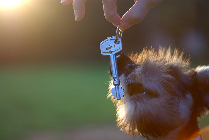 Dog getting key to rental property