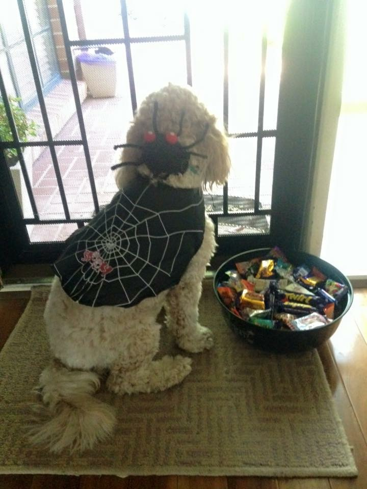 Dog waiting at door Halloween