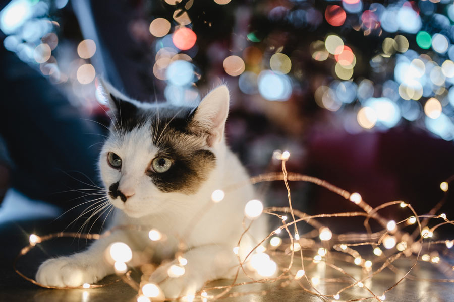 tabby cat under Christmas tree