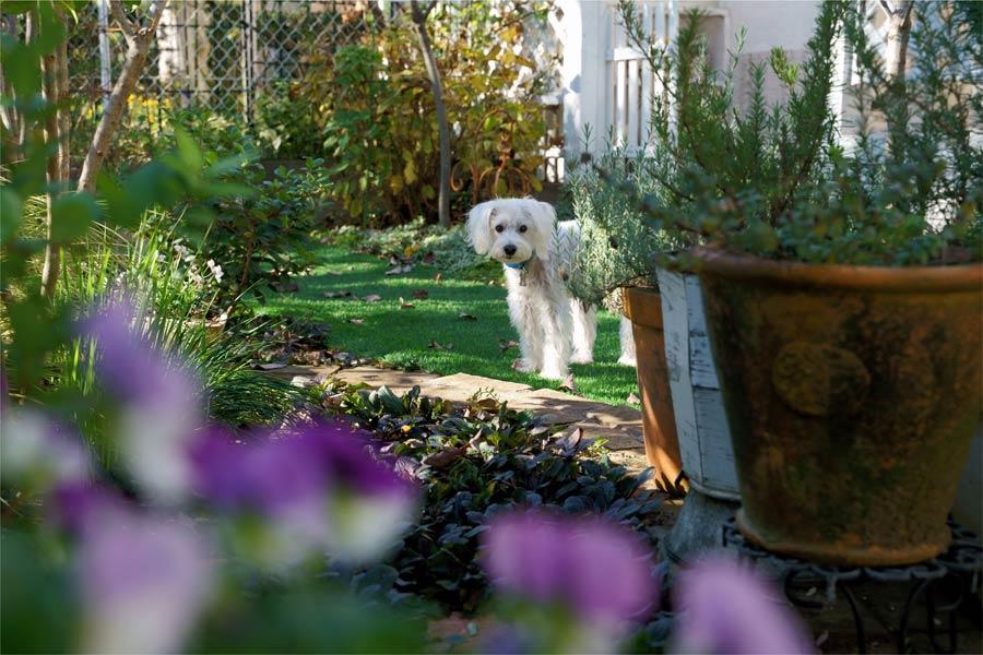 white dog in the garden