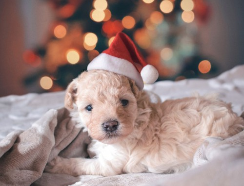 Festive season pet safety tips