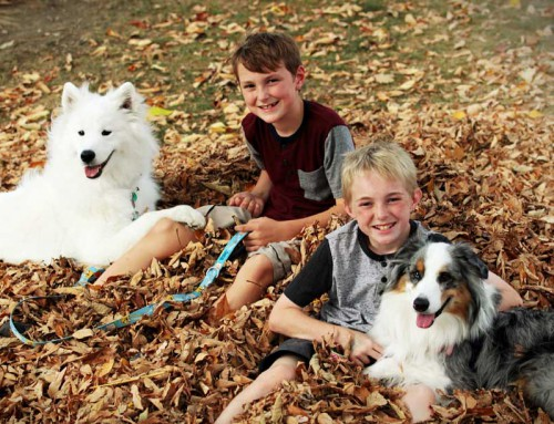 Top 10 best dogs for kids
