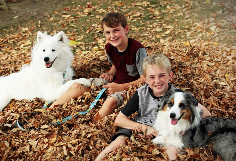 two boys with dogs on leads