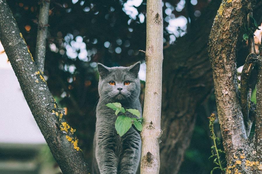 grey cat in tree