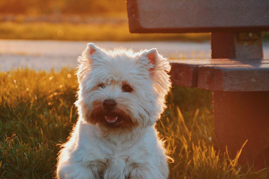 white dog sitting outdoors