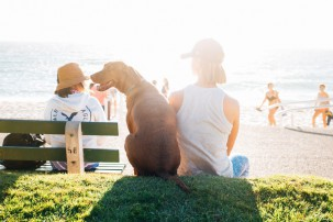 large dog sat by owner at beach, pet health insurance