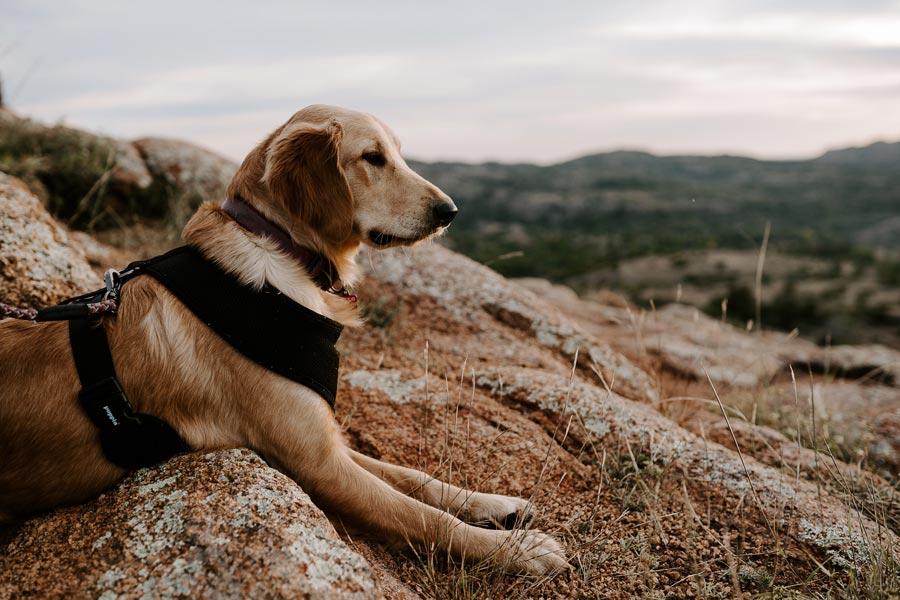 dog outdoors lying on rock