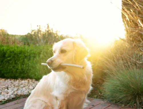 10 awesome dog-friendly activities for you and your fur pal