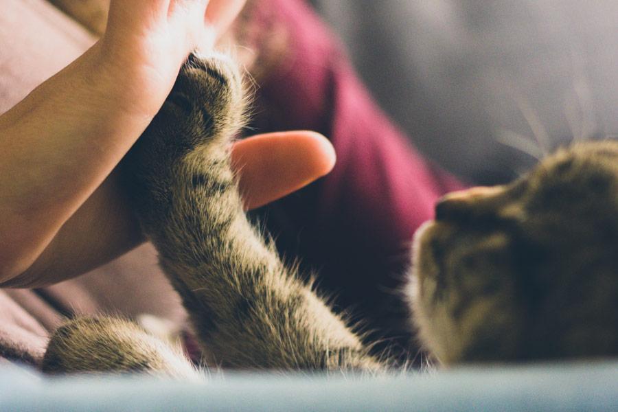 Human palm holding cat's paw