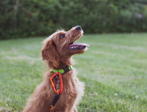 Dog training tips for pet owners