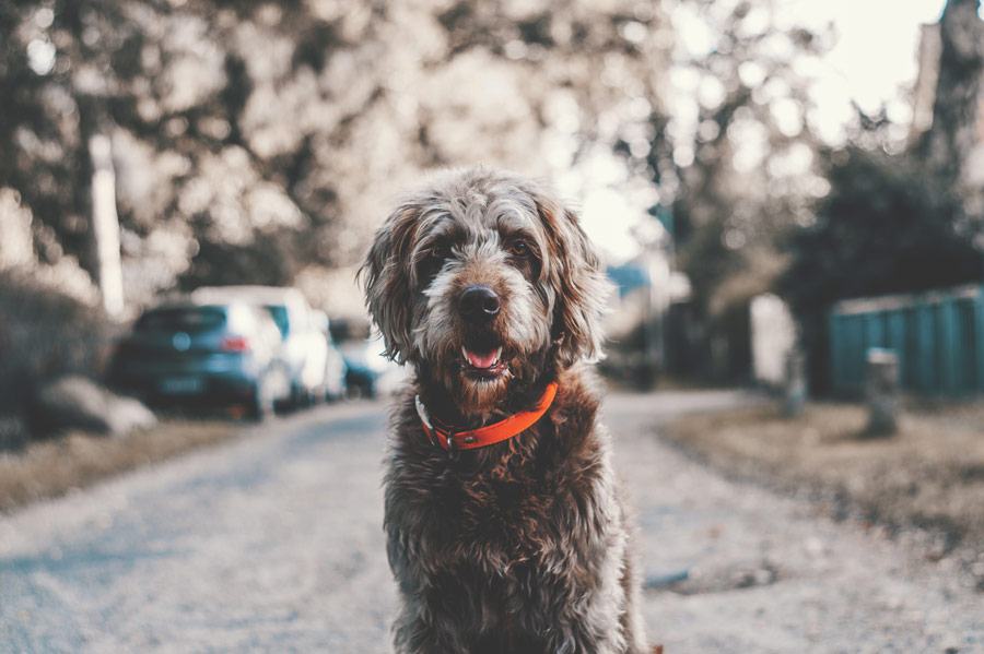 scruffy dog sitting in middle of the road