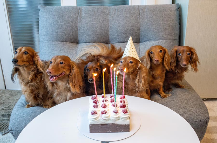 Terrific How To Celebrate Your Pets Birthday In Style Petsecure Funny Birthday Cards Online Overcheapnameinfo