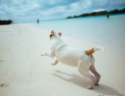 Your guide to taking your pet on holidays