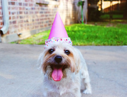 How to celebrate your pet's birthday in style