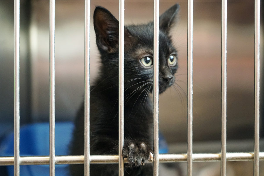 cat in cage, adopting a pet