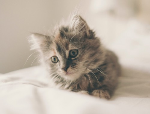 Your guide to life with a new kitten