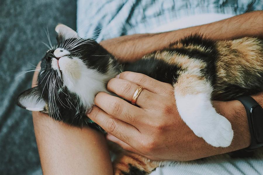 woman scratching a cat