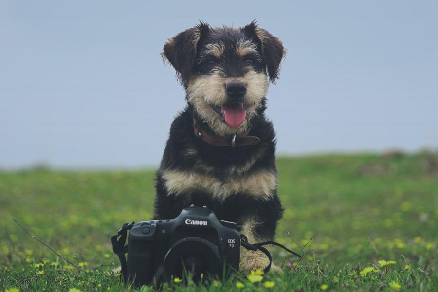 scruffy black and white dog sat on grass next to camera