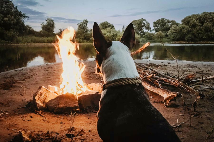 dog sat by camp fire, camping with your dog