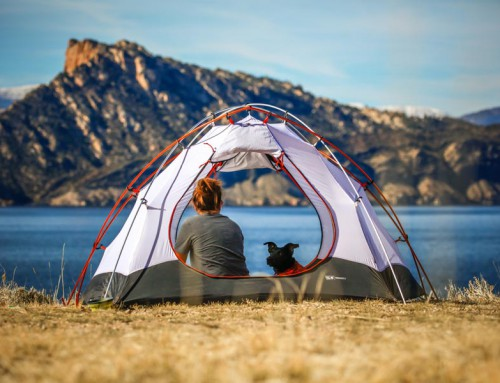 5 reasons to go camping with your dog