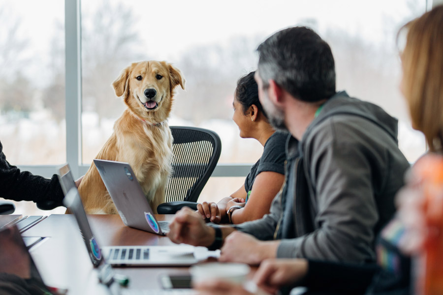 dog in office meeting