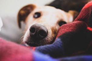 dog in blanket, winter pets safe