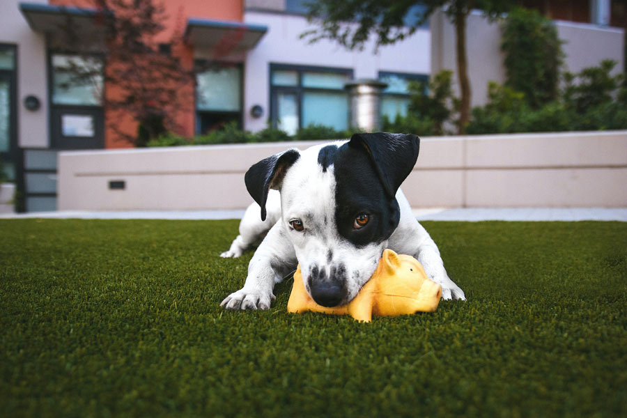 young dog with chew toy