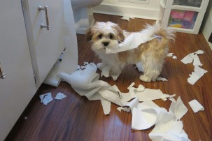 naughty dog in bathroom with toilet paper, dog boredom