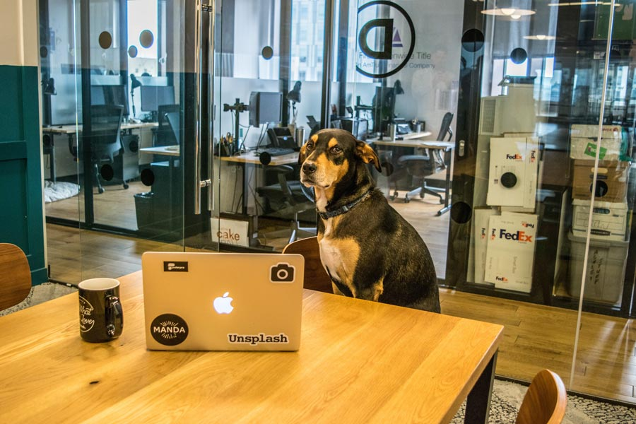 dog sat at office desk, dog in the workplace