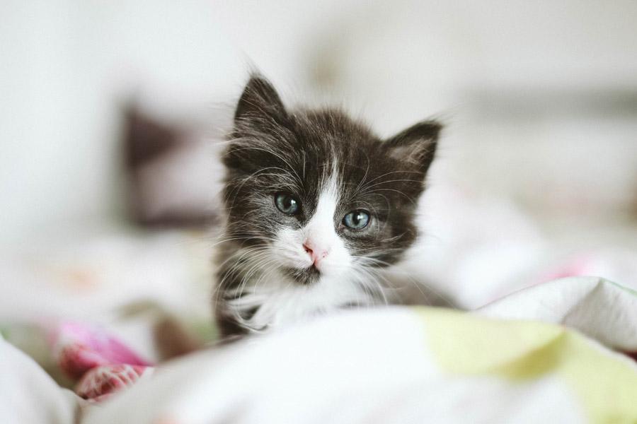 black and white kitten, kitten proof house