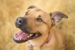 brown dog at dog park