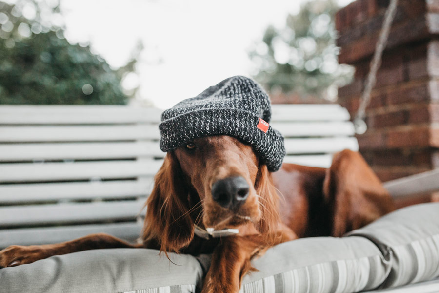 dog wearing beanie, winter pet safety