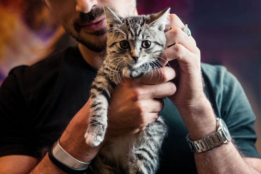 man patting cat