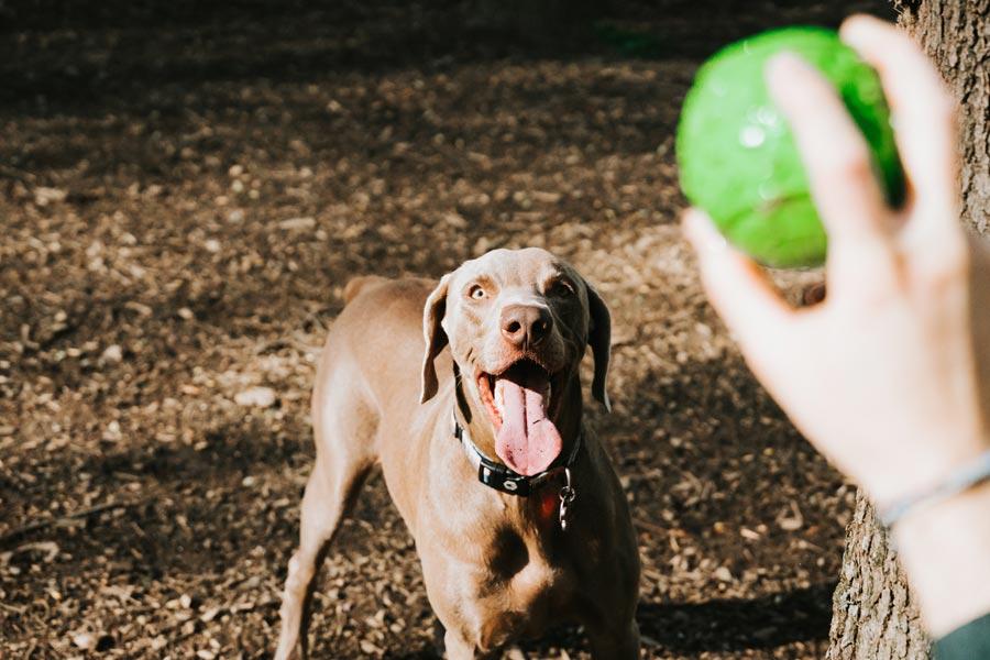 dog with ball at dog park