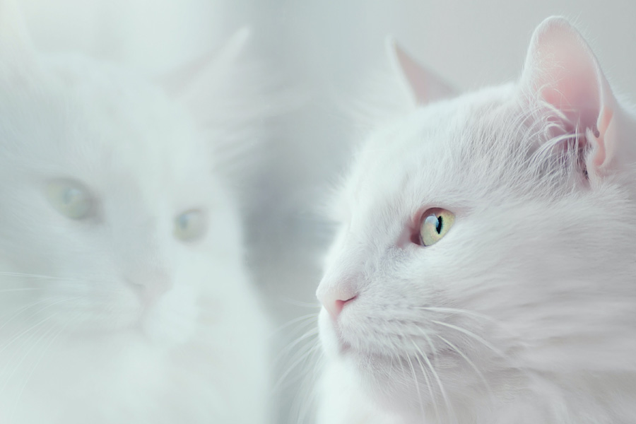 white cat looking out of window